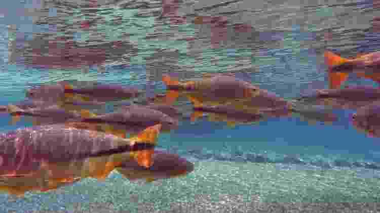 Água cristalina em flutuação no Rio Olho d'Água, uma das etapas da atividade no Rio da Prata - Eduardo Vessoni/UOL - Eduardo Vessoni/UOL