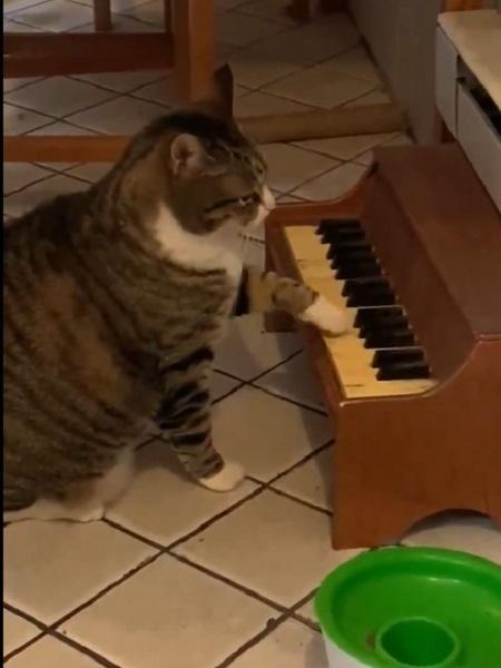 Winslow usa piano para se comunicar - Reprodução/Twitter