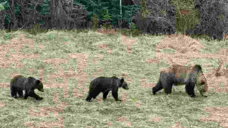 A família de ursos que Jamie conseguiu fotografar em um de seus passeios - Jamie Albino - Jamie Albino