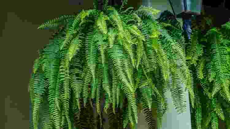 Folhas desbotadas e menos vigorosas são sinais de desitradação da planta - Getty Images/iStockphoto - Getty Images/iStockphoto