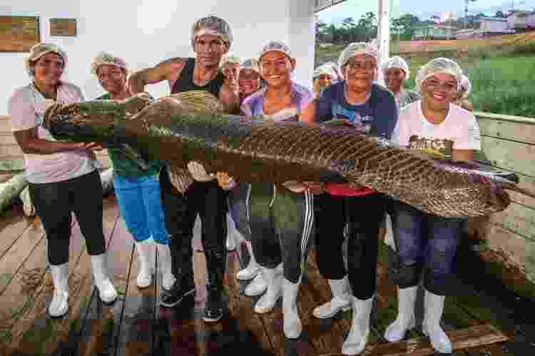 Grupo segura pirarucu pescado dentro de projeto de manejo da espécie no Amazonas - Bernardo Oliveira/Divulgação - Bernardo Oliveira/Divulgação