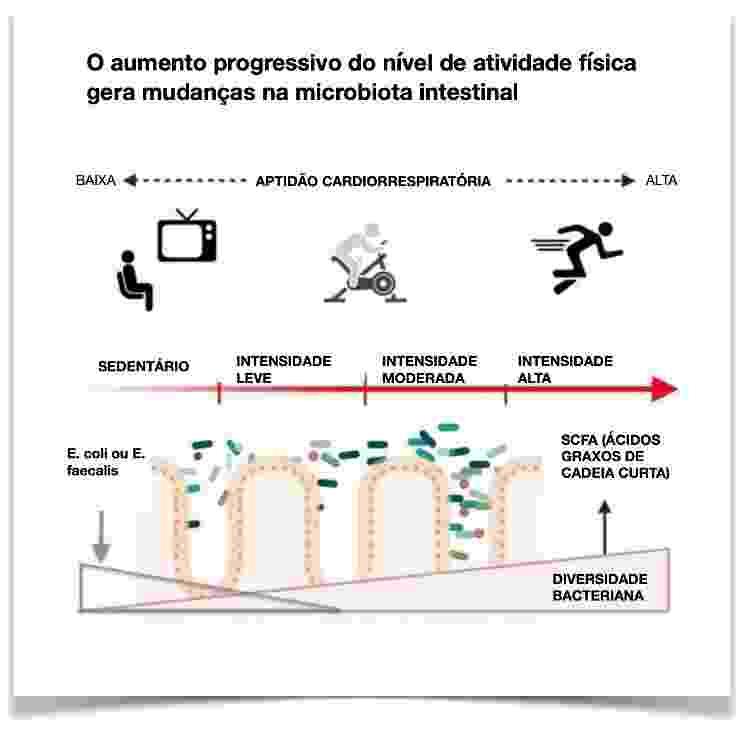 Efeitos benéficos do exercício e modificações da microbiota intestinal em indivíduos inativos - Clauss et al (2021) - Clauss et al (2021)