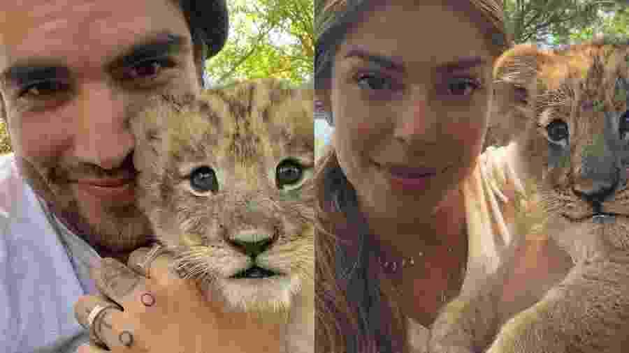 Caio Castro e Grazi Massafera tiram foto com filhotes de leão - REPRODUÇÃO/INSTAGRAM