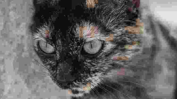 Sexta-feira 13 é dia de alerta para os protetores de animais - Carine Wallauer/UOL - Carine Wallauer/UOL