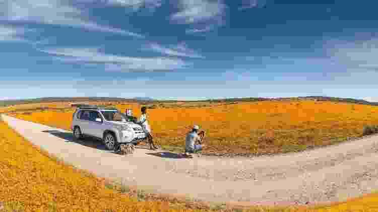 Florada de Namaqualand, África do Sul - South African Tourism/Divulgação - South African Tourism/Divulgação