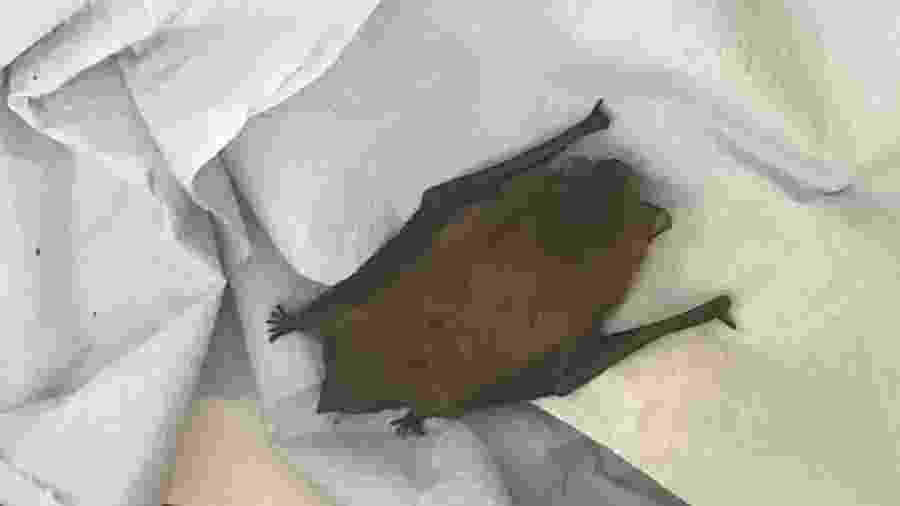Morcego é encontrado em carro após viagem entre França e Inglaterra - Divulgação