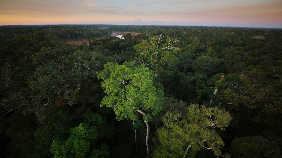 Dossel da Floresta Amazônica no Peru.  - Rhett A. Butler/Mongabay.