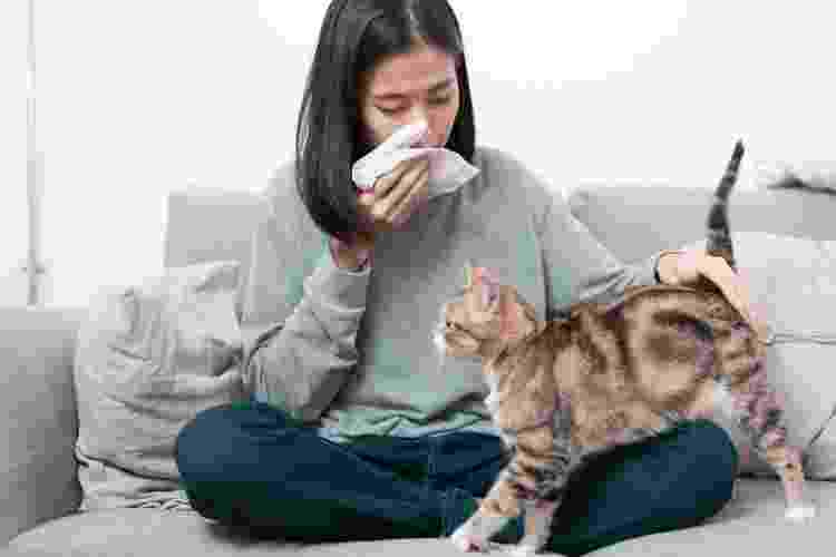 A alergia humana é relacionada a uma proteína presente na saliva, pele e pelo dos gatos - Getty Images/iStockphoto - Getty Images/iStockphoto
