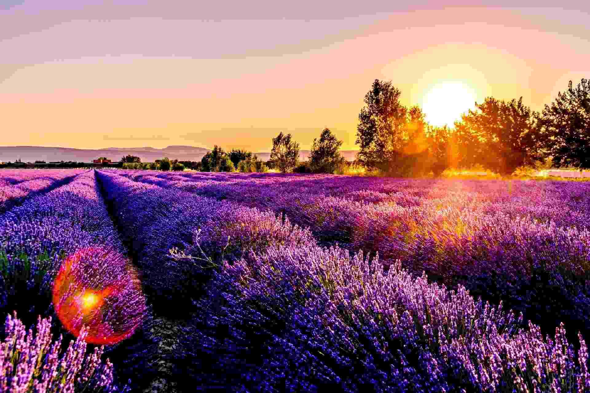 Destinos ultravioleta - Provença, França - Divulgação/Skyscanner