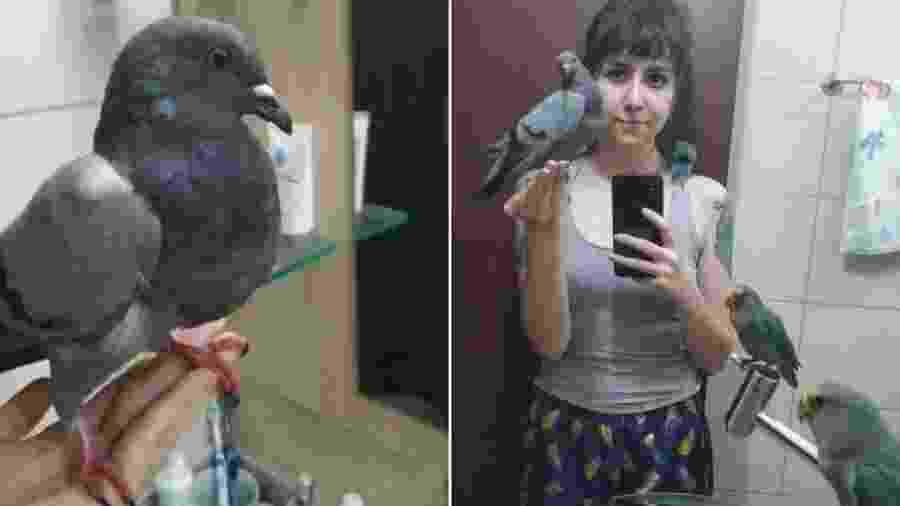 Ela adotou um pombo perdido e está à espera do dono - Reprodução/Twitter