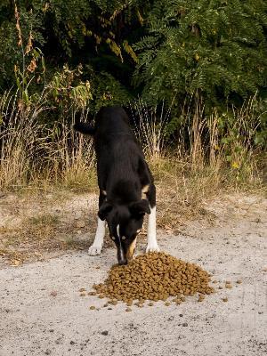 Cão se alimenta em Chernobyl - Reprodução/Airbnb