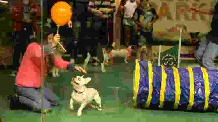 Sthefany Brito se diverte em gincana com seu cão Snow em um shopping do Rio - Ag.News - Ag.News