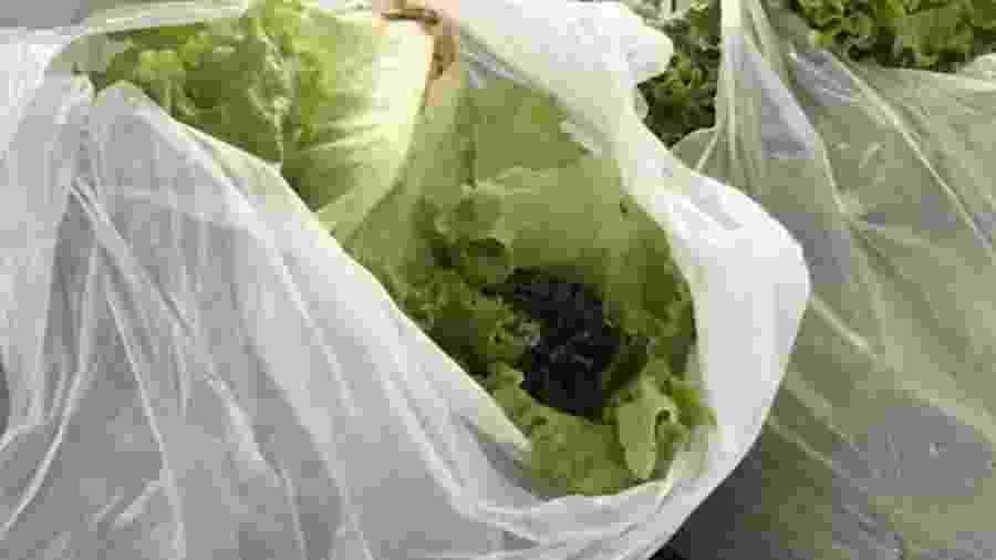Cobra foi encontrada em pé de alface comprado em supermercado de Goianésia (GO) - Arquivo Pessoal