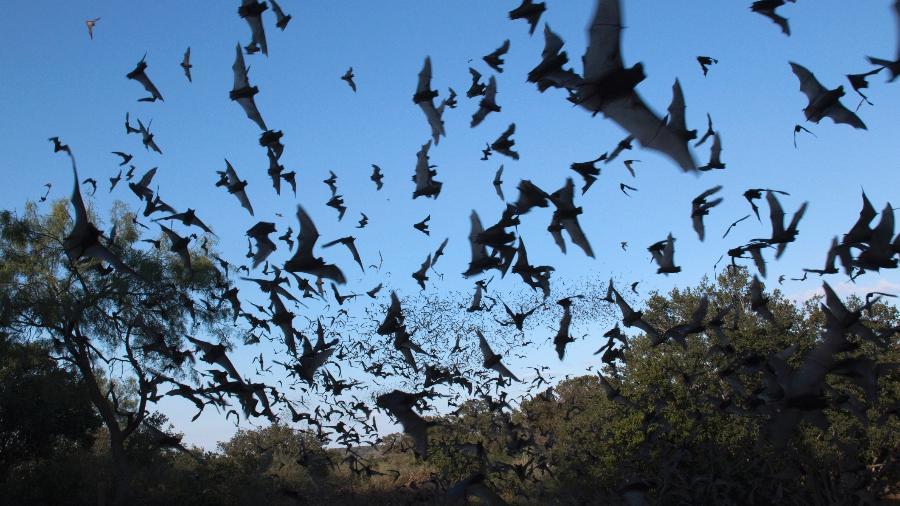 Morcegos são bem comuns nas cidades do Texas, como Austin - Getty Images