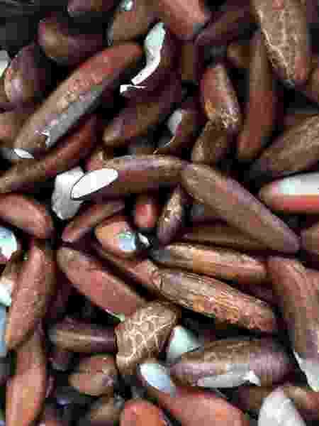 Sementes do coco babaçu - Bela Gil - Bela Gil