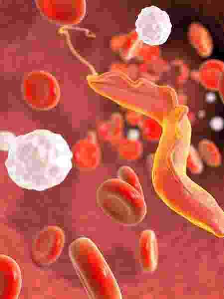 Surtos recentes da doença estão ligados ao consumo de alimentos contaminados - iStock