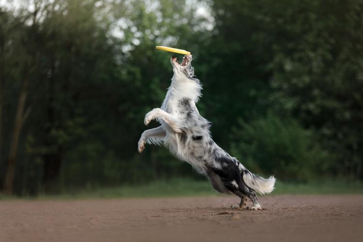 """Gastar energia é essencial para um cãozinho """"terrível"""" - Getty Images/iStockphoto - Getty Images/iStockphoto"""