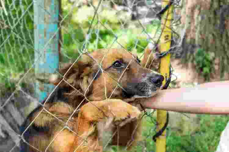 Em busca de companhia no isolamento, mais pessoas adotaram pets na pandemia - Getty Images/iStockphoto - Getty Images/iStockphoto