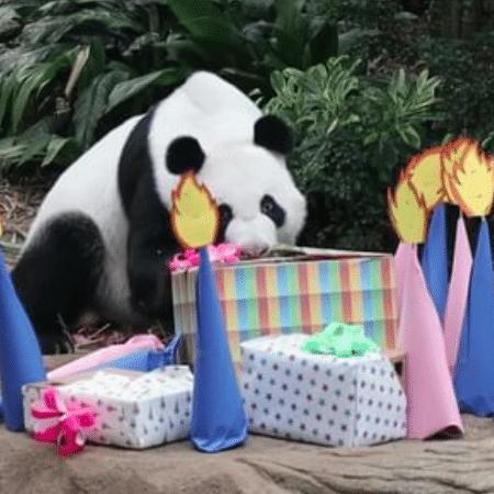 É menino! O zoológico de Singapura registrou o momento da revelação do sexo do novo bebê panda - Reprodução/Instagram