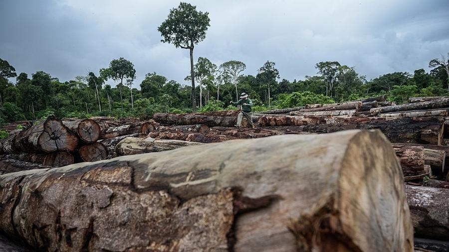 Apreensão de madeira ilegal na Terra Indígena Pirititi, em Rondônia - Felipe Werneck/Ibama