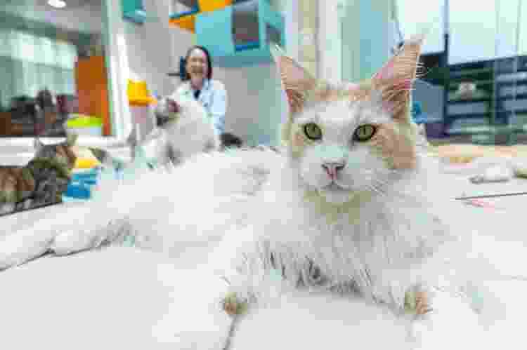 Vanessa Zimbres, da Clínica Gato é Gente Boa, defende que lambedura garante a limpeza dos gatos - Julio Salvo/JF - Julio Salvo/JF