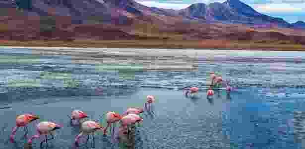 Lagoas com flamingos marcam as paisagens que rodeiam o Salar do Uyuni - Getty Images - Getty Images