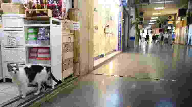 Gato Rubinho está liberado pra andar pelos corredores da galeria em Copacabana - Roberto Moreyra/Agência O Globo - Roberto Moreyra/Agência O Globo