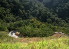 16 Estados deflagram operação contra desmatamento da Mata Atlântica - Eduardo Vessoni/UOL