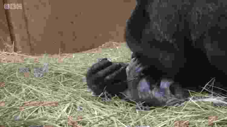 O momento de intimidade entre a mãe e seu filhote - BBC - BBC