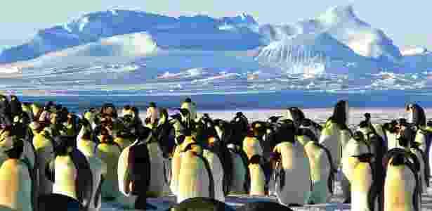 Encontro com pinguins fará parte da visita à Antártida - ImageCatcher/Creatve Commons