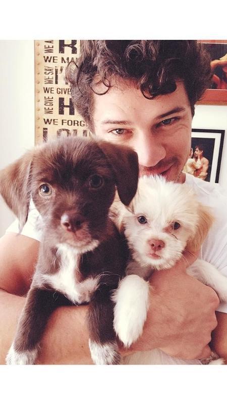 José Loreto com as cachorrinhas de estimação que ele adotou com Débora Nascimento - Reprodução/Instagram