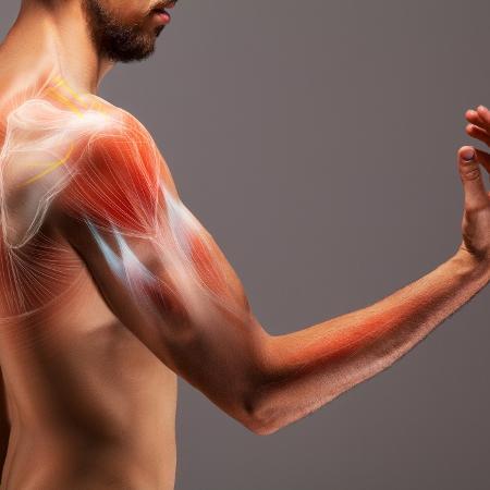 A longo prazo, a tecnologia seja aplicada para a melhoria do estado da massa do músculo esquelético em indivíduos com debilidade muscular - iStock
