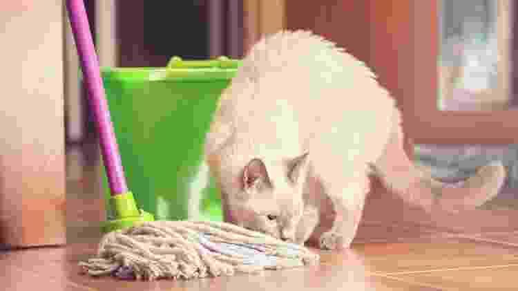bichos produtos de limpeza pets - Getty Images/iStockphoto - Getty Images/iStockphoto