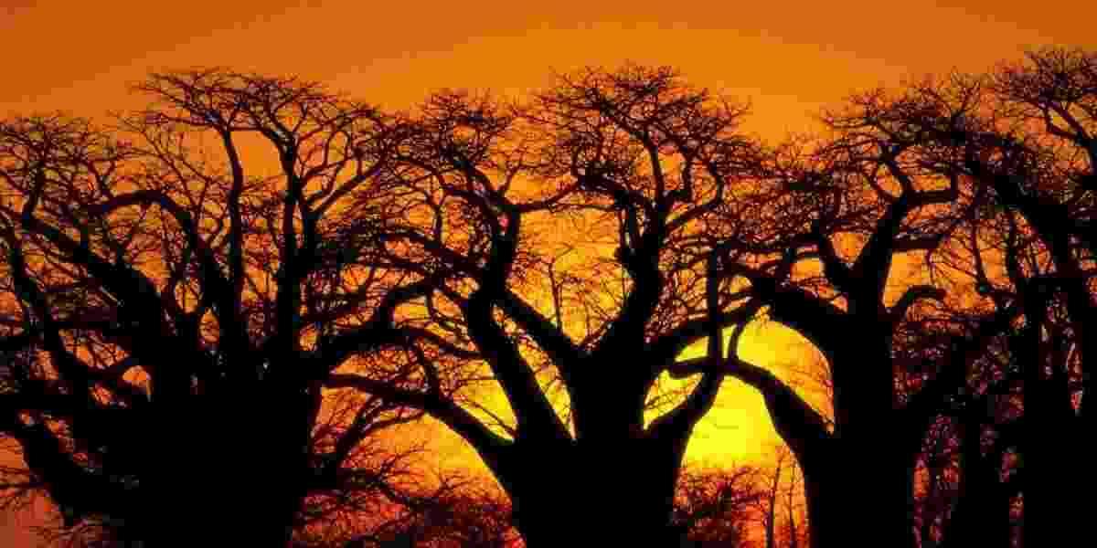 Localizada no sul do continente africano, Botswana é um país tropical repleto de reservas naturais e paisagens deslumbrantes.  - Organização de Turismo de Botswana