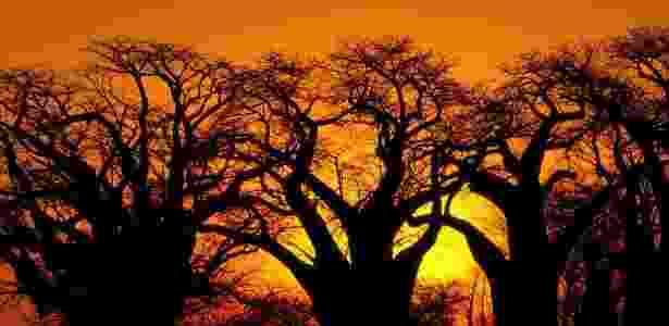 Organização de Turismo de Botswana