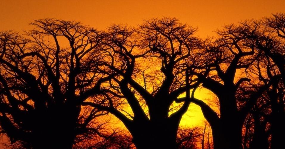 Localizada no sul do continente africano, Botswana é um país tropical repleto de reservas naturais e paisagens deslumbrantes.