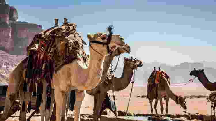 Dromedários em Wadi Rum - Konstantinos Kaskanis/Unsplash - Konstantinos Kaskanis/Unsplash