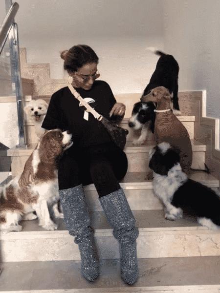 Anitta e seus cinco cachorros - Reprodução/Instagram