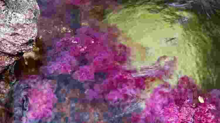 Em uma área remota da Colômbia está o rio Caño Cristales - Reprodução/BBC - Reprodução/BBC