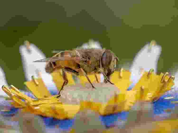 """Abelha em flor artificial do projeto """"Insectology: Food for Buzz"""", Atelier Boelhouwer - Janneke van der Pol  - Janneke van der Pol"""