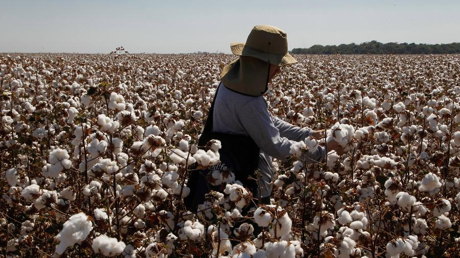 Colheita do algodão em Lucas do Rio Verde, Mato Grosso - Clauber Cleber Caetano