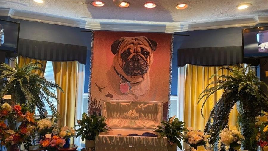 O funeral pomposo do cachorrinho Dexter: morto aos 7 anos - Reprodução Facebook