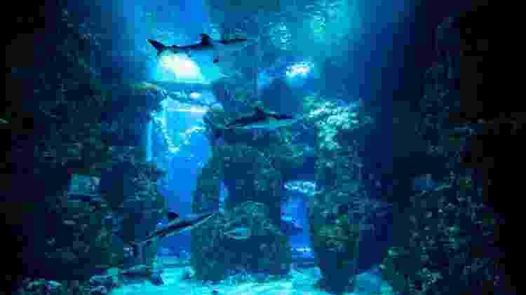 Museu Oceanógrafo de Mônaco - Divulgação