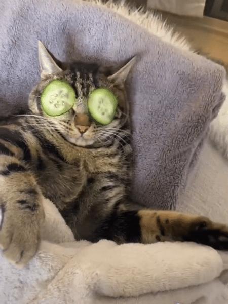 Pepinos nos olhos: momento de autocuidado felino - Reprodução TikTok