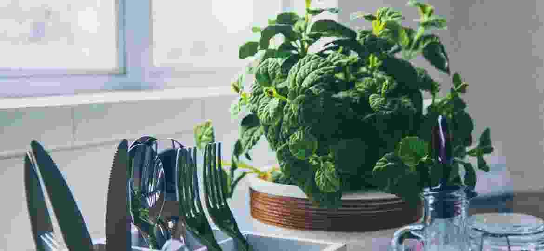 O manjericão pode crescer dentro ou fora de casa, o importante é ter bastante luz - Al Kawasa/Unsplash