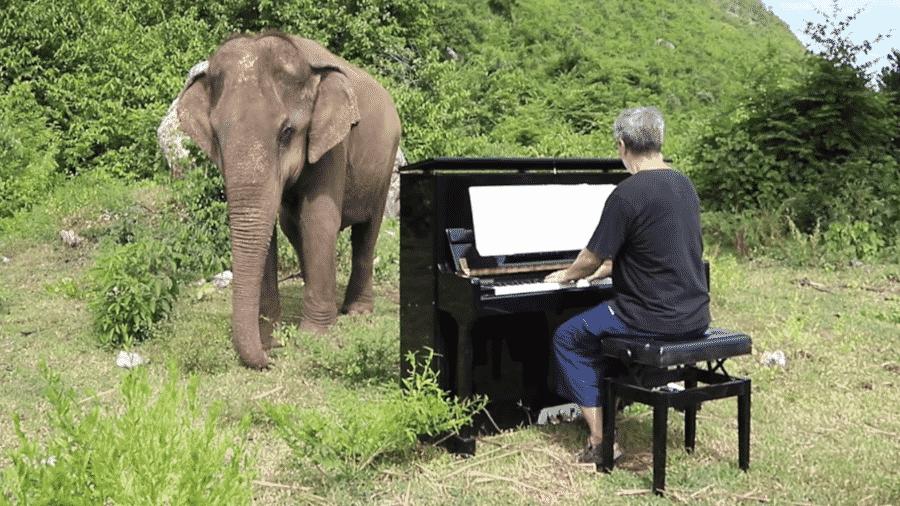 Homem toca piano para elefanta cego na Tailândia - Reprodução