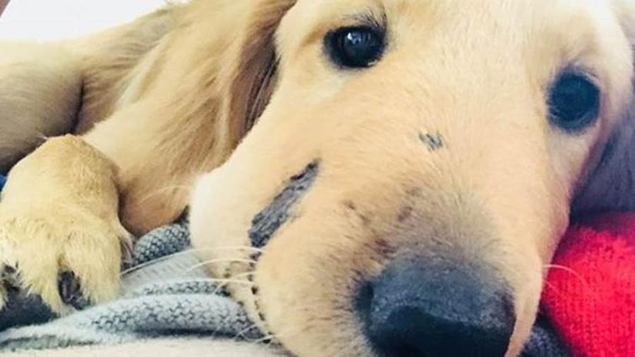 O filhote Todd ficou famoso depois que sua foto foi compartilhada nas redes sociais, com o rosto inchado pela picada de cobra - Reprodução