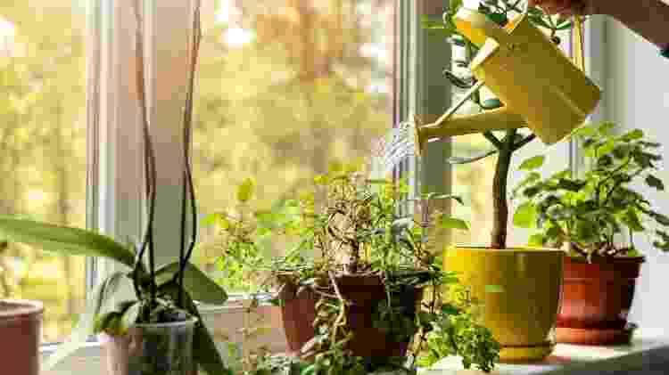 """Experimente por uma planta """"triste"""" no sol, das 6h às 8h, e você verá milagres acontecerem - Getty Images/iStockphoto - Getty Images/iStockphoto"""