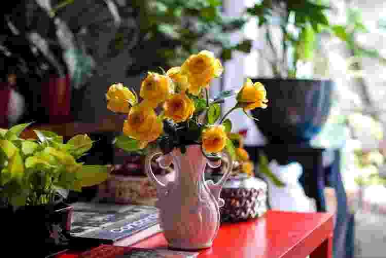 Não importa o suporte: as flores deixam tudo mais bonito - Raphael Francisco Puttini - Raphael Francisco Puttini