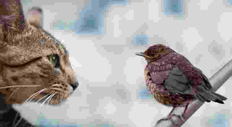 Especialistas não recomendam a convivência entre aves e gatos - Getty Images/iStockphoto - Getty Images/iStockphoto